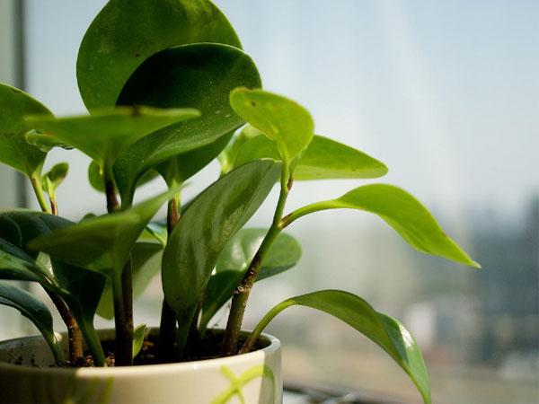 根据居室功能选植物——最佳客厅绿植