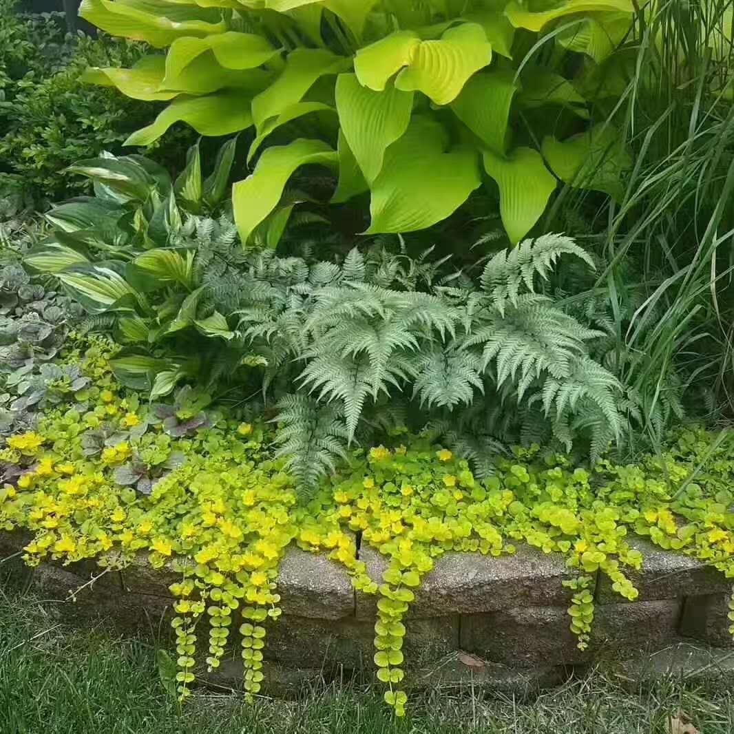 花镜植物设计施工