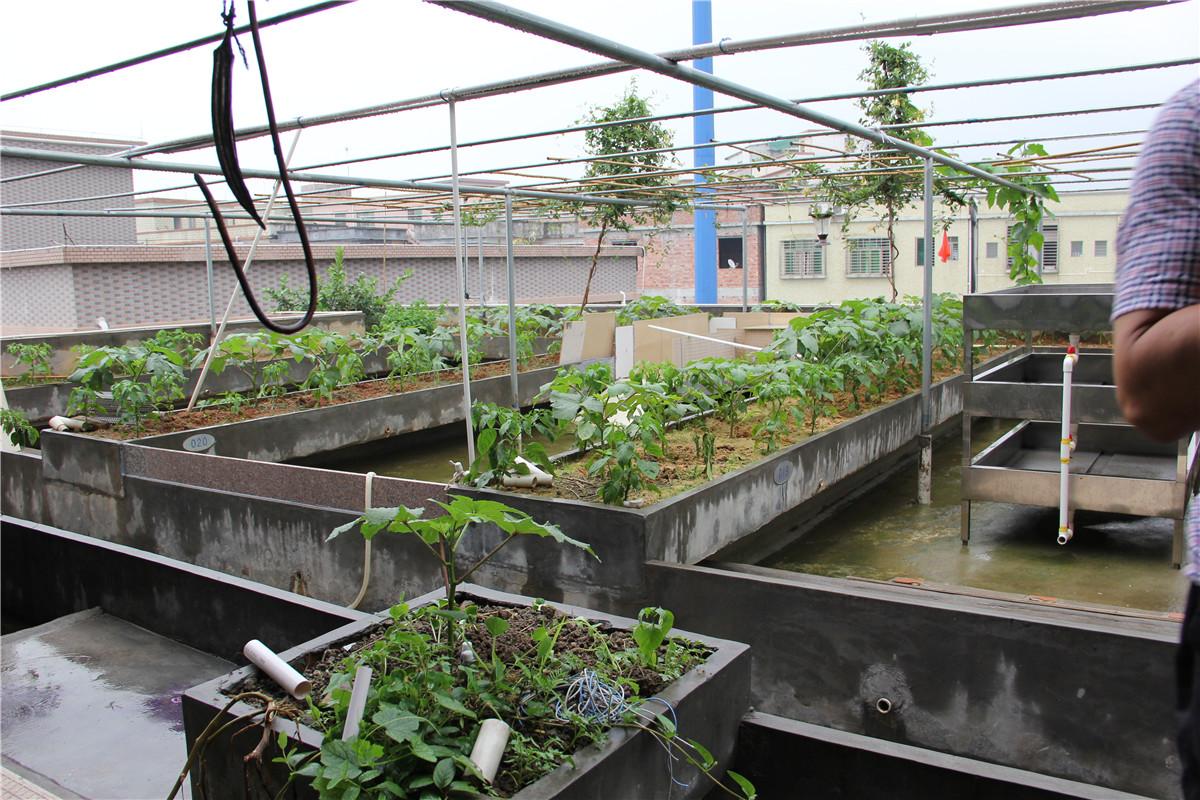 养殖场养龟设施